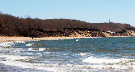Seagulls flying in the wind over the Long Island sound looking at the bluffs hills at Sunken Meadow State Parks beach
