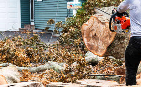 Selective focus on man with chainsaw cuttiing up trees that fell during a storm miced into wires in front of a residential home. Stockfoto