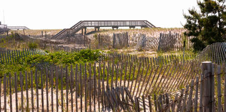Wooden walkways to safely get over sand dunes and picket fences with green brush protecting Fire Island Long Island New York. Stockfoto
