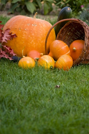Autumn still life with pumpkins photo