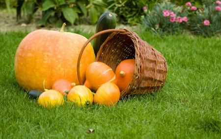 Autumn decoration with pumpkins photo