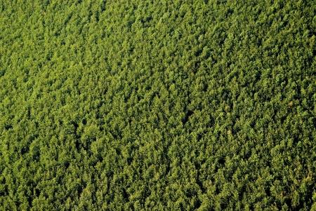 aerial: Texture di foresta