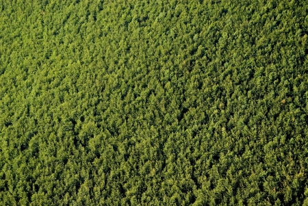 aerial views: Texture of forest