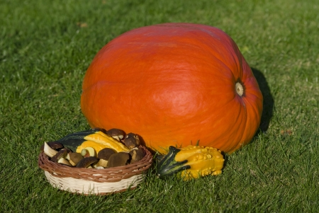 Autumn decoration with pumpkin and mushroom photo