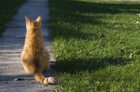 stay in green: Cat sitting in garden on the pavement path