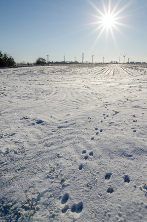 spoor: Winter landscape with animal spoor, sun and wind turbines in Nordfriesland, Germany. Stock Photo