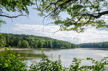 natural vegetation: Beautiful calm lake framed by natural vegetation in Czech Republic on a sunny day.