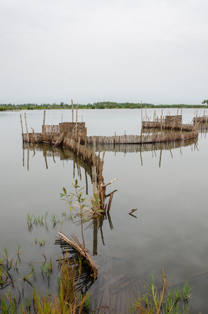 Traditional reed fishing traps used in wetlands near the coast in Benin. These walls lead the fish into narrow traps where they can be collected. Stock Photo