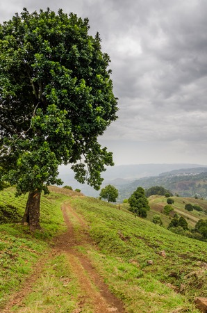 traditon: Small footpath next to large tree in highlands of Cameroon with dramatic cloudy sky, Africa Stock Photo