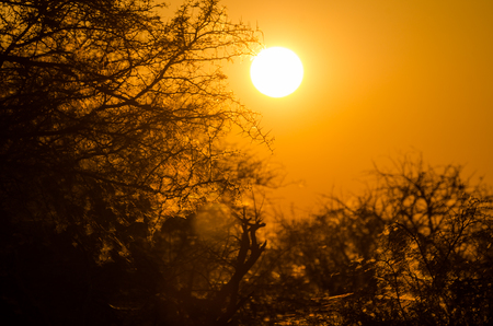 Beautiful red orange sunrise over silhouette of thorny trees with spider webs in Etosha National Park, Namibia, Africa