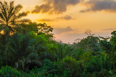 Belle forêt tropicale ouest-africaine luxuriante au coucher du soleil incroyable, Libéria, Afrique de l'Ouest