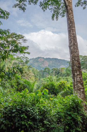 Landscape with lush green rainforest with tall old trees and green hills in background, Nigeria