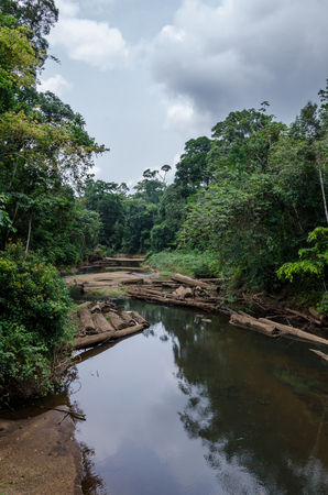 Landscape with tropical river flowing peacefully through lush rain forest of Nigeria, Africa Stock Photo