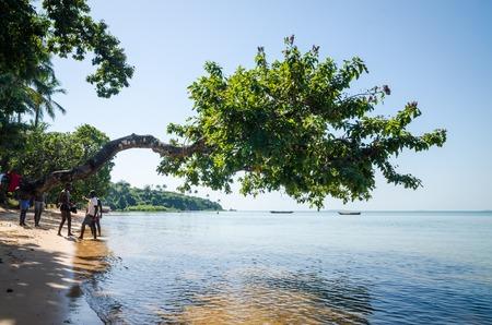 Bubaque, Guinea Bissau - December 07, 2013: Tree growing over ocean at beach of Bijagos island Bubaque, Guinea Bissau