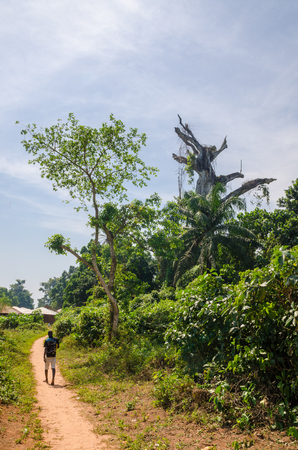 Bubaque, Guinea Bissau - December 09, 2013: Holy dead tree and man on foot path on island Bubaque, Bijagos archipelago