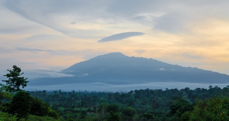 Scenic view of Mount Cameroon mountain with green forest during sunset, highest mountain in West Africa, Cameroon, Africa. Banco de Imagens