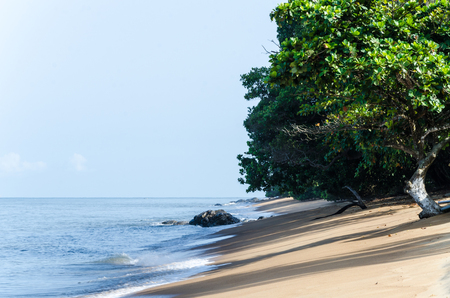Deserted sandy beach with green trees at coast of Cameroon near Kribi.