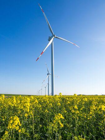 Turbiny wiatrowe lub wiatraki wytwarzające energię elektryczną z energii wiatru na polu żółtego rzepaku lub rzepaku, Nordfriesland, Niemcy.