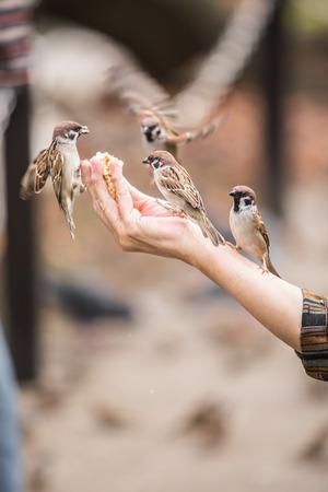 dispensation: feed a bird in garden Stock Photo
