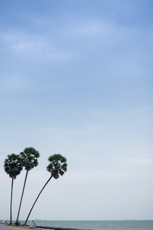 by feel: Coconut trees is three. is feel heartbroken or feel rest.