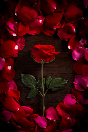 Rose on wood floor background. Give rose to darling in valentine Stock Photo