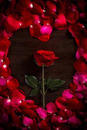 rosas rojas: Rose en el fondo piso de madera. Y p�talos de rosa forma es coraz�n. D� rosa a Darling en San Valent�n Foto de archivo