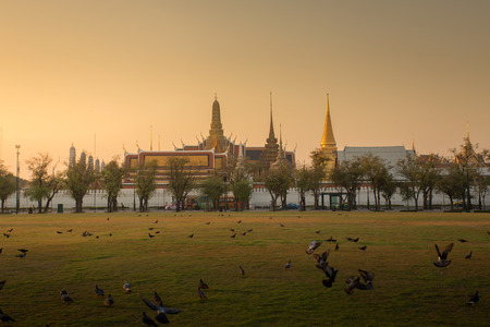Many bird and background is Wat Phra Kaew in morning. Imagens - 36685622