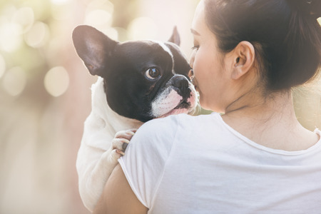 purebred dog: French bulldog is cute kissing girl. She carry on a dog.