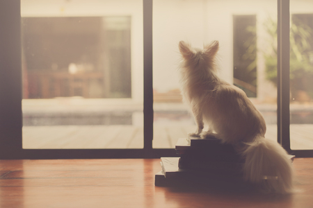 Lonely dog sit on books. This photo process is sepia style.