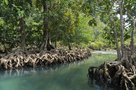 Mangrovebos in de dagtijd.
