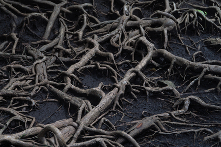Abstract root pattern on ground. Stock Photo