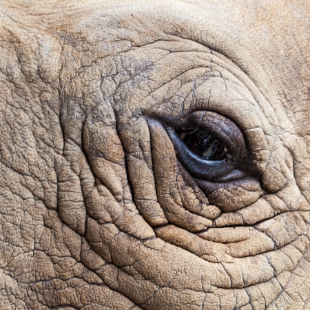 Close up of Rhino head photo