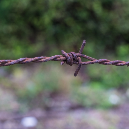 Rusty barb wire with out focus backgroud Stock Photo - 18986766