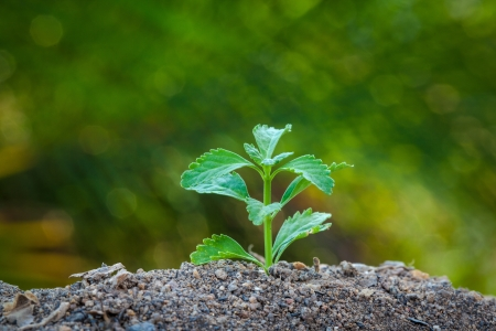 Tiny plant growing from soil with green out focus background Stock Photo - 19155338