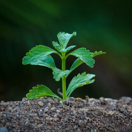 out of focus: Tiny plant growing from soil with green out focus background
