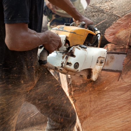 Worker man cutting the big tree with machine saw.
