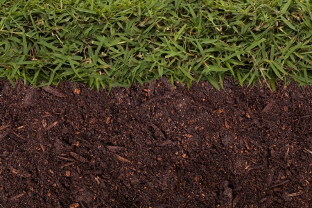 Texture of grass and soil photo