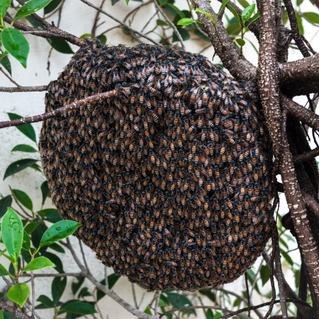 honeycomb on the tree,insect,animal photo