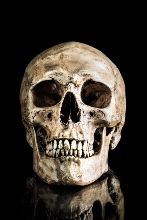 Human skull on isolate black background with reflection photo