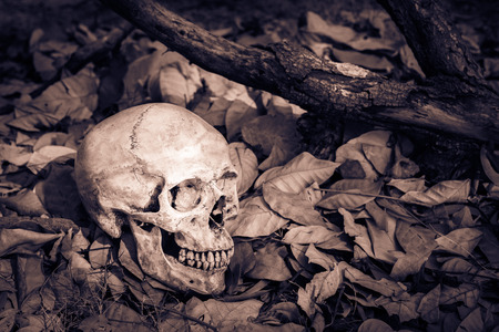 Still life, skull on dry leaves and log in the park Stock Photo