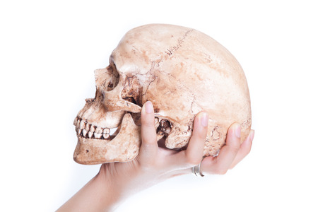 Human skull in the hand on isolated white background photo