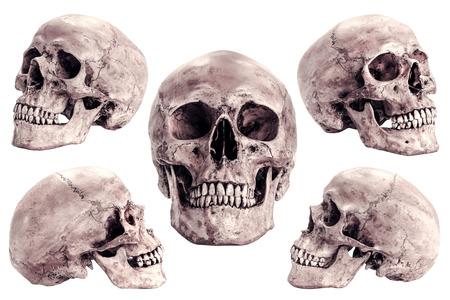 Modello del cranio su sfondo bianco isolato Archivio Fotografico - 26873334