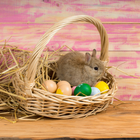 sweet grasses: Funny little rabbit among Easter eggs in velour grass