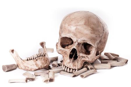 partes del cuerpo humano: Modelo de cráneo en el fondo blanco aislado