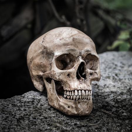 Still life,  human skull on the rock photo