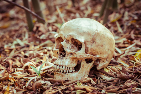 Image result for human skeleton in leaves