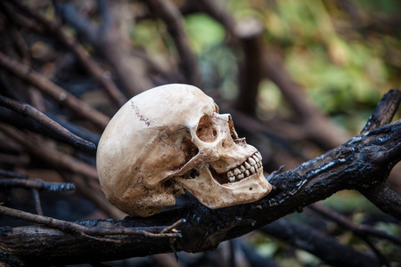 Still life, skull on dry leaves and log in the park photo