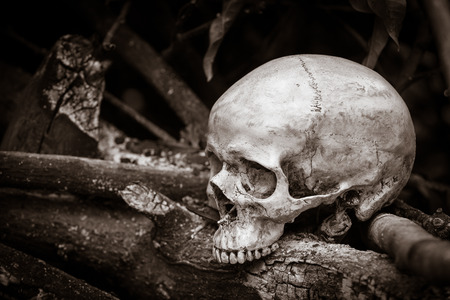 Still life with human skull on ashes in the forest photo