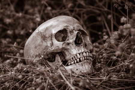 corpse flower: Still life, skull on dry flowers in the park