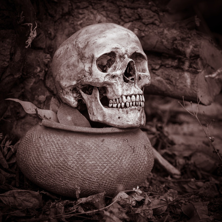 Still life with skull on dry leaves and clay pot in the park photo